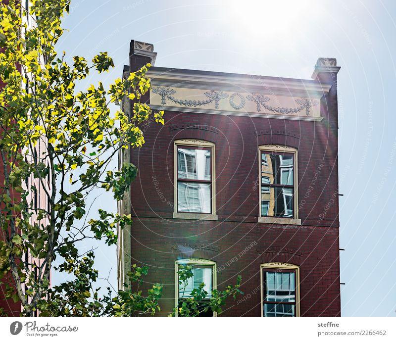 Around the World: Washington Wolkenloser Himmel Sonnenlicht Schönes Wetter Baum Haus Einfamilienhaus Mauer Wand Fassade Idylle Häusliches Leben USA Farbfoto
