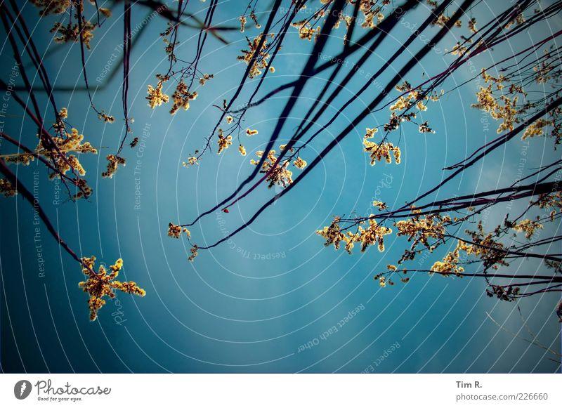 Hängender Zaubergarten Himmel Natur alt blau Pflanze ruhig Winter Ferne Erholung kalt Herbst Freiheit oben Luft hell Feld