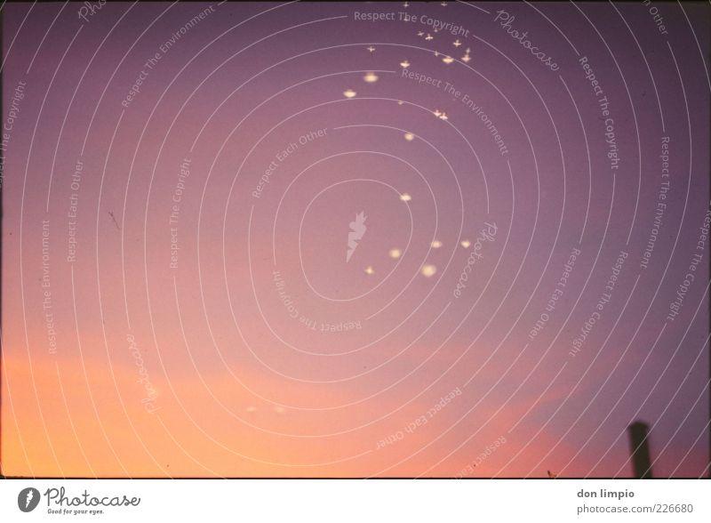 Funkenflug Himmel Umwelt Wärme Stimmung Luft klein hell Horizont außergewöhnlich violett viele analog Schönes Wetter Schornstein Sonnenaufgang