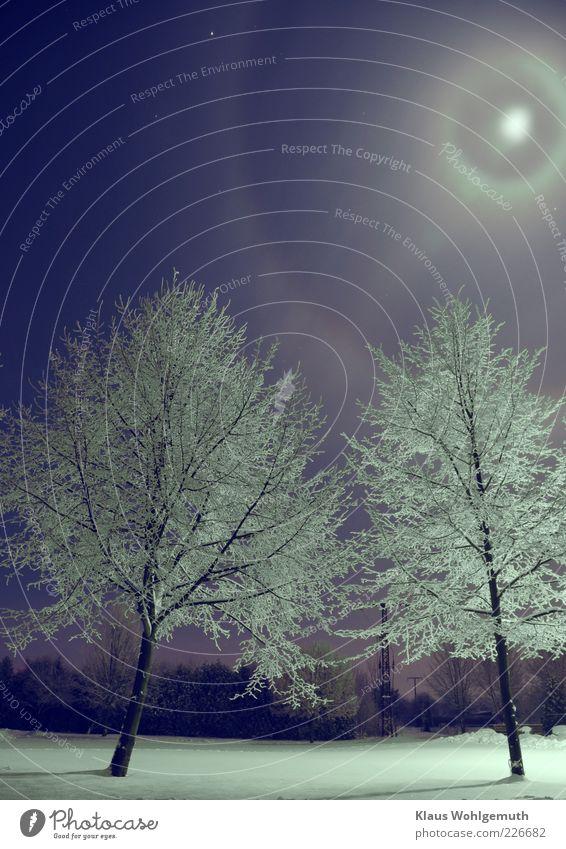 """""""Zieht euch warm an"""" ruhig Winter Schnee Himmel Wolkenloser Himmel Nachthimmel Stern Mond Vollmond Klima Schönes Wetter Baum blau silber weiß Romantik"""