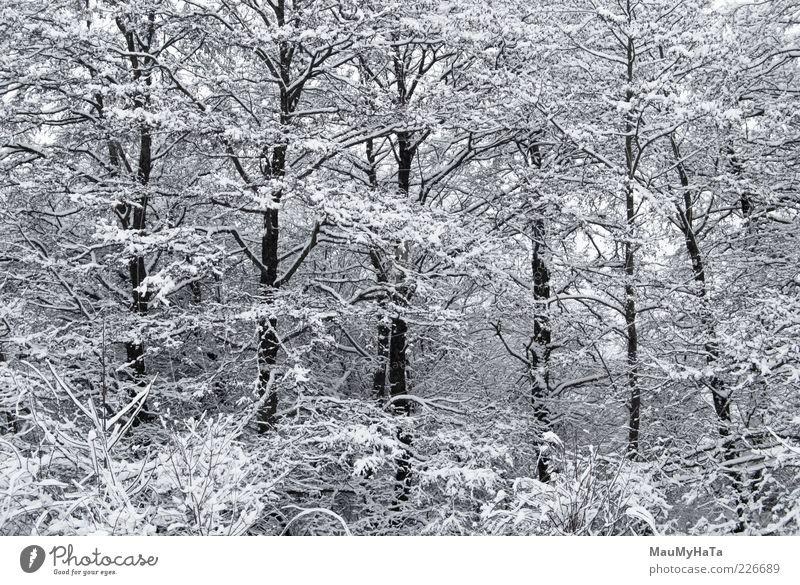 Winter Natur Landschaft Pflanze Wolkenloser Himmel Horizont Klima schlechtes Wetter Eis Frost Schnee Baum Park Wald Holz Wasser alt Coolness dunkel kalt