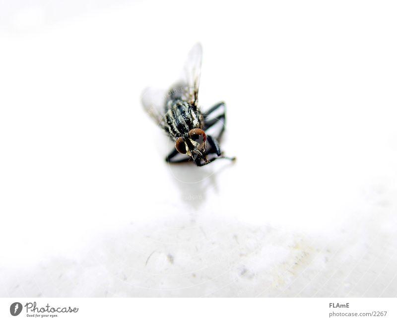 Tote Fliege tote fliege Makroaufnahme fly Tod dead