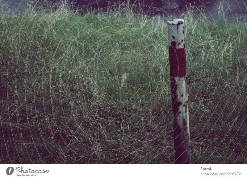schon immer alt weiß grün Pflanze rot Gras kaputt Sicherheit trist Schutz Rost Pfosten Ödland standhaft Begrenzung Grenzpfahl