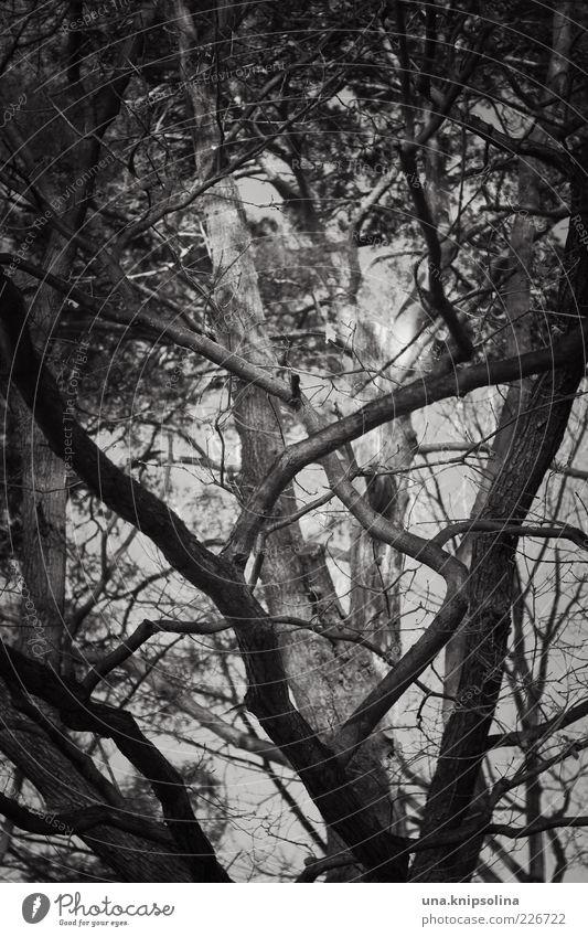 treehugger Umwelt Natur Baum Wald Wachstum viele wild durcheinander Ast Baumkrone dunkel Düsterwald Schwarzweißfoto Außenaufnahme Detailaufnahme abstrakt Muster