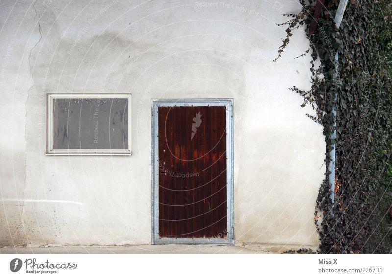 Tür Fenster Efeu Pflanze Blatt Haus Wand Mauer Fassade einfach Bauernhof Ranke Eingangstür Holztür