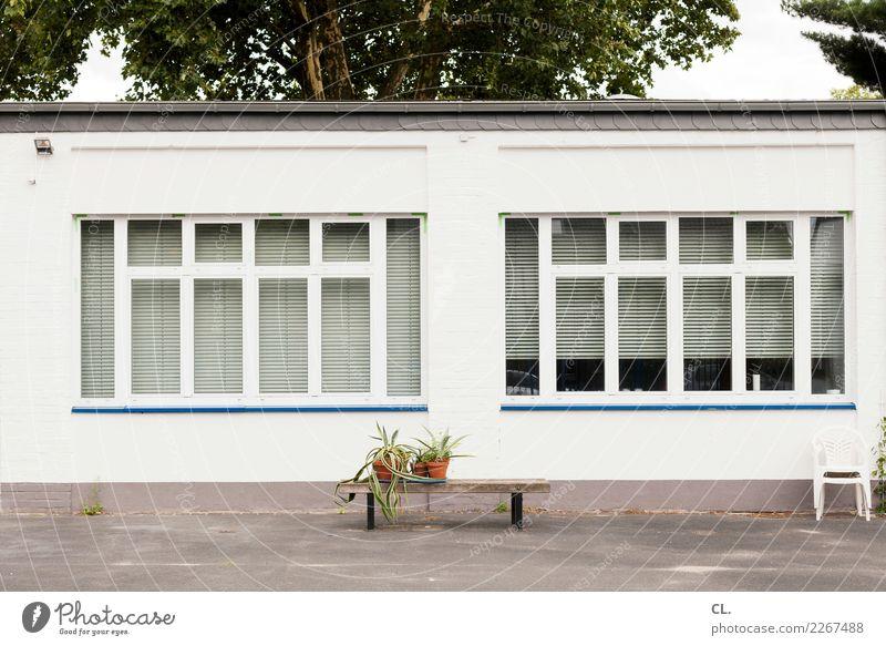 topfpflanzen auf bank Pflanze Baum Haus Fenster Architektur Wand Mauer Häusliches Leben Dekoration & Verzierung trist Platz Stuhl Bank Topfpflanze Rollo