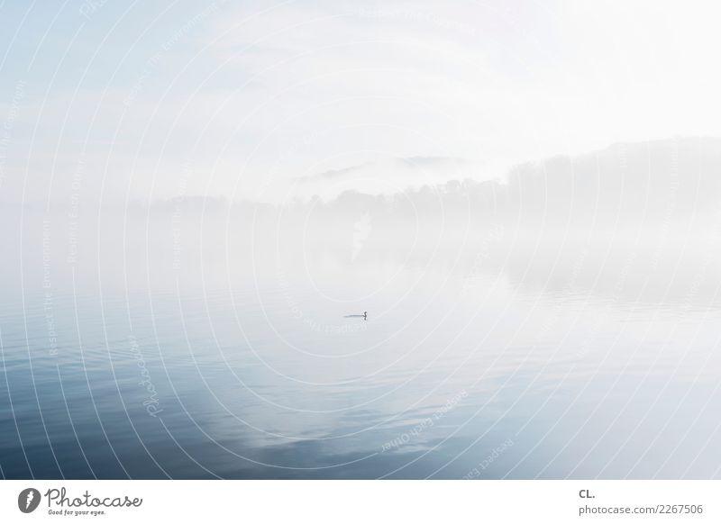 2100 | stiller tag Himmel Natur Wasser Landschaft Tier Wolken ruhig Winter Wald Umwelt Freiheit Stadt Essen See Vogel frei Nebel