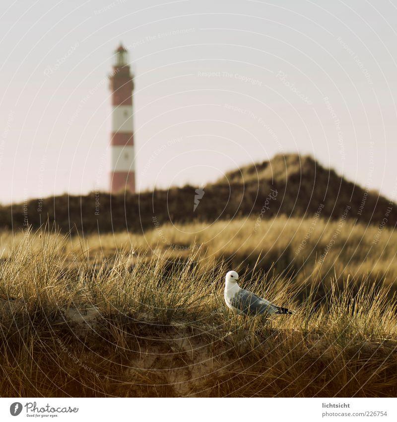 Möwe&Leuchtturm Himmel Natur Sonne Sommer Ferien & Urlaub & Reisen Tier Landschaft Sand Wetter Vogel wandern Insel Tourismus ästhetisch Wildtier Hügel