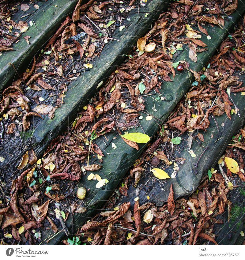 Leaves & Stripes Umwelt Natur Pflanze Blatt alt entdecken braun mehrfarbig gelb Treppe Holz Herbst Herbstlaub faulig Farbfoto Detailaufnahme Menschenleer Balken