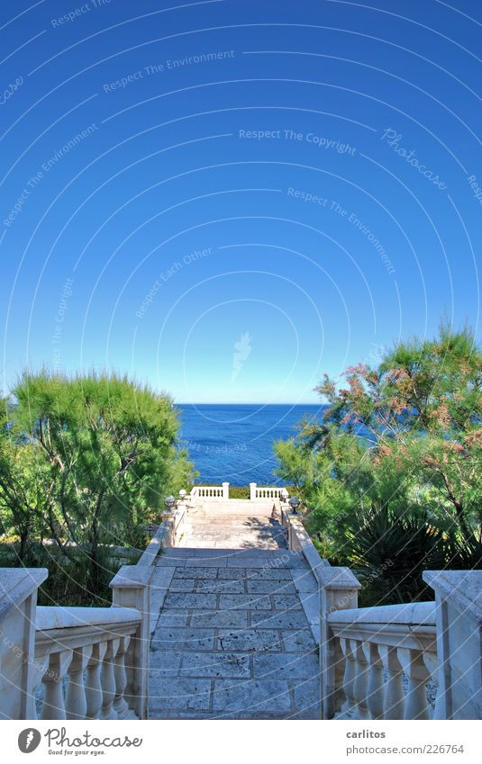 Meer erleben Wasser blau Pflanze Sommer Meer Ferne Erholung Garten Küste Horizont Treppe ästhetisch Sträucher Reichtum Geländer Aussicht