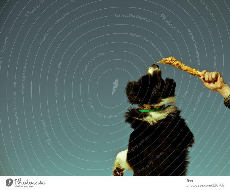 hand im spiel Himmel Hand Winter Tier Spielen springen Hund Freizeit & Hobby Finger Aktion festhalten Fell Schönes Wetter Haustier Pfote kämpfen