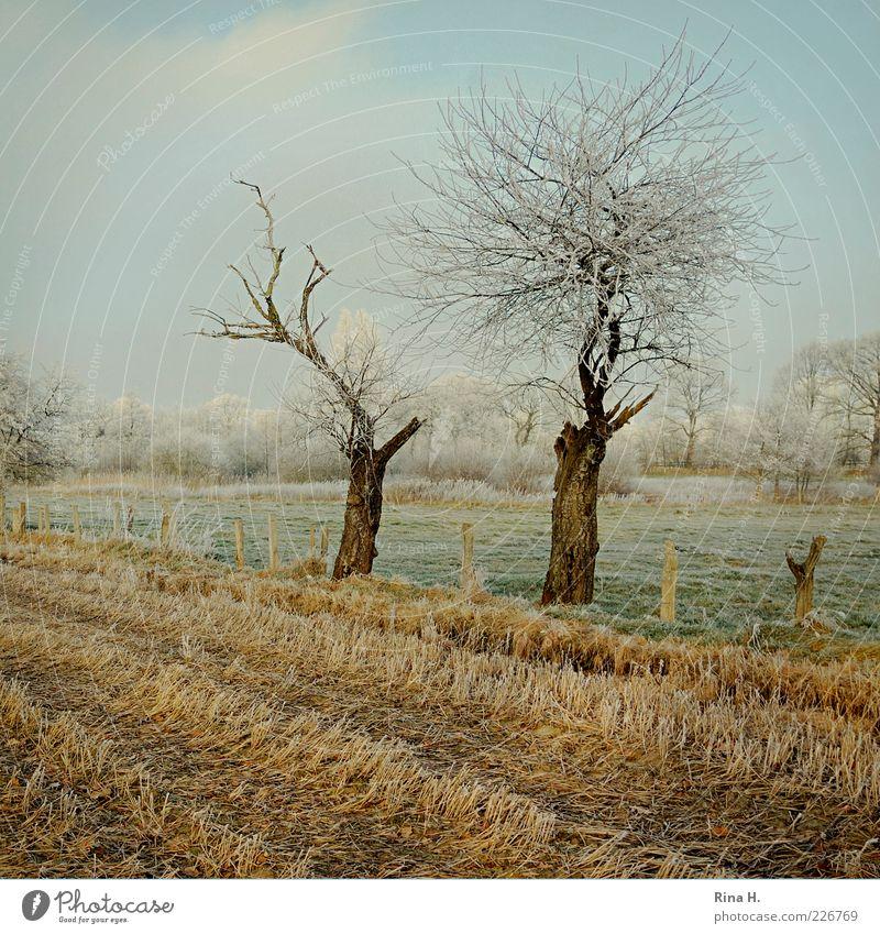 Winterliches Stoppelfeld Natur Erde Himmel Baum Wiese Feld Schleswig-Holstein kalt gelb grün reif Farbfoto Menschenleer Tag Raureif laublos Baumstamm