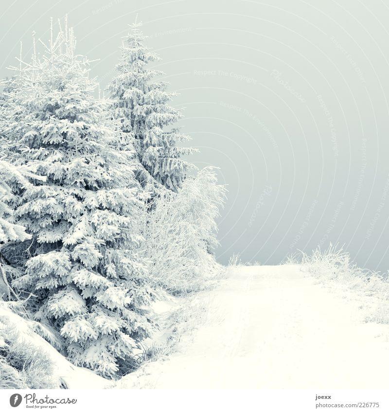 Kalt Natur Landschaft Wetter Eis Frost Schnee Wege & Pfade grau weiß ruhig kalt Tanne Farbfoto Gedeckte Farben Außenaufnahme Menschenleer Tag