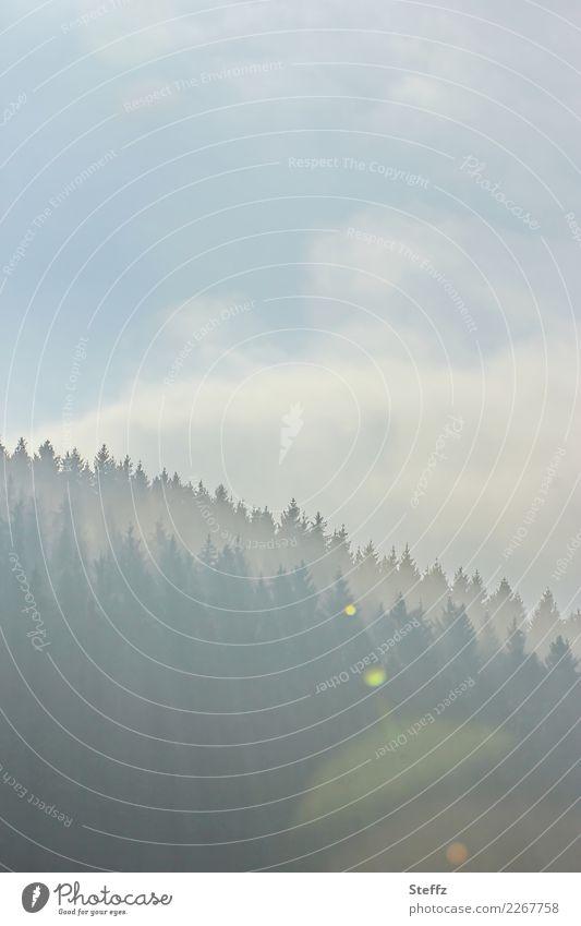 Morgenlicht Umwelt Natur Landschaft Luft Himmel Wolken Wetter Schönes Wetter Nebel Baum Nadelbaum Wald Hügel Waldrand schön Lichtstimmung Nebelstimmung ruhig