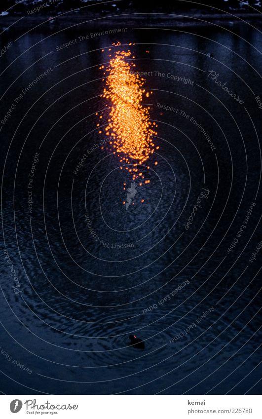 Wasserfeuer Umwelt Natur Tier Urelemente Winter Flussufer Isar Wildtier Ente 1 leuchten dunkel blau gelb Kreis Wasseroberfläche Wellen Beleuchtung Licht orange
