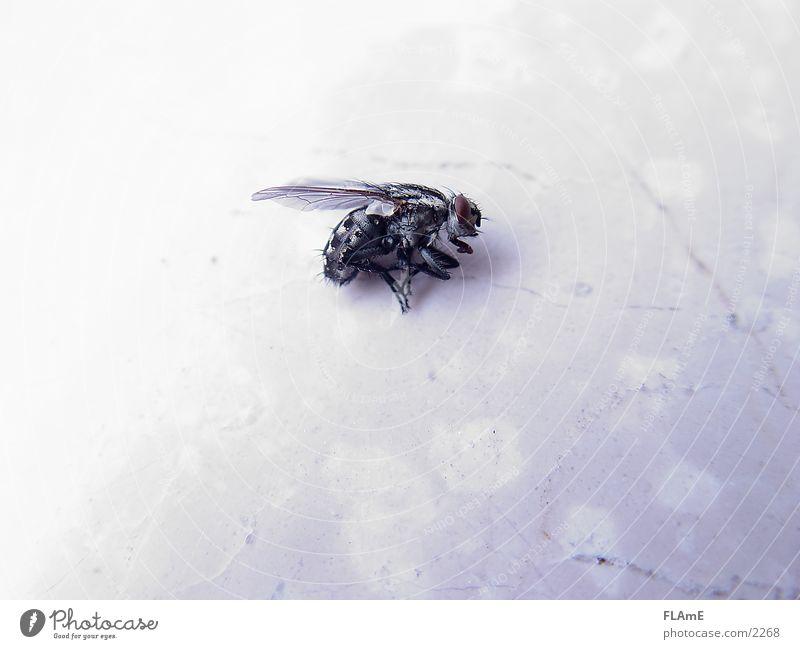 Fliege #2 tote fliege fly Makroaufnahme Tod dead