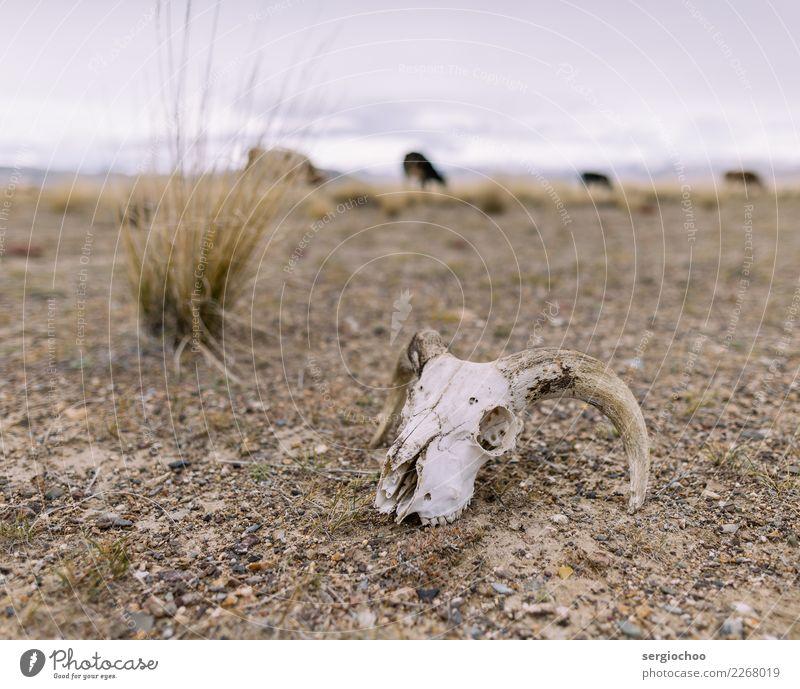 Tod Stimmung Angst Sträucher gefährlich Vergänglichkeit Todesangst Wüste Stress chaotisch Halloween Friedhof Schwäche Schüchternheit Entsetzen Ödland