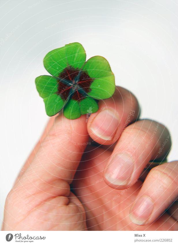 Ich schenk dir mein Glück grün Hand Blatt Finger Tierhaut Symbole & Metaphern festhalten Fingernagel Klee Kleeblatt schenken Glückwünsche Glücksbringer Blume