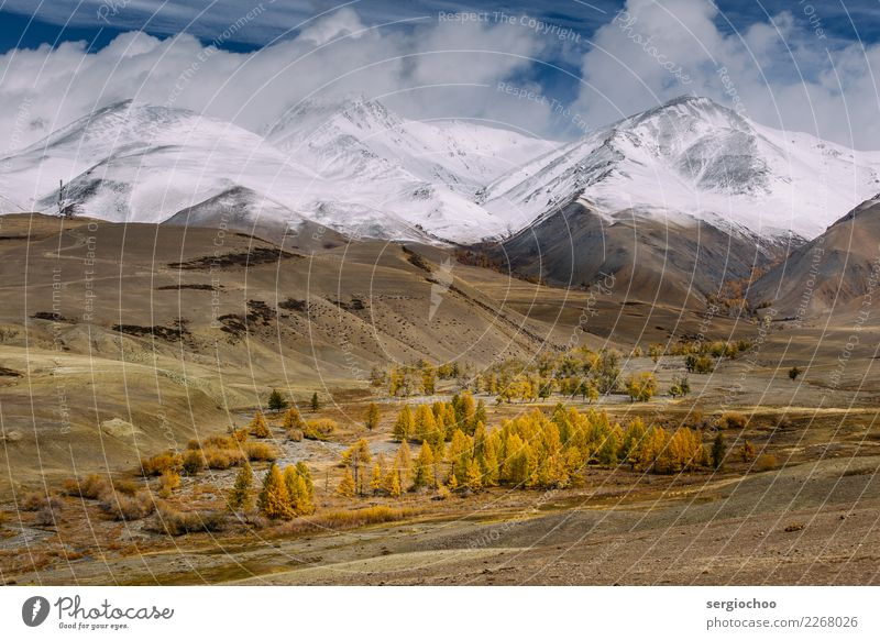 der Winter kommt Klettern Bergsteigen wandern Natur Landschaft Wolken Gewitterwolken Sonne Herbst Klima Klimawandel Wetter Schnee Baum Wiese Feld Wald Hügel