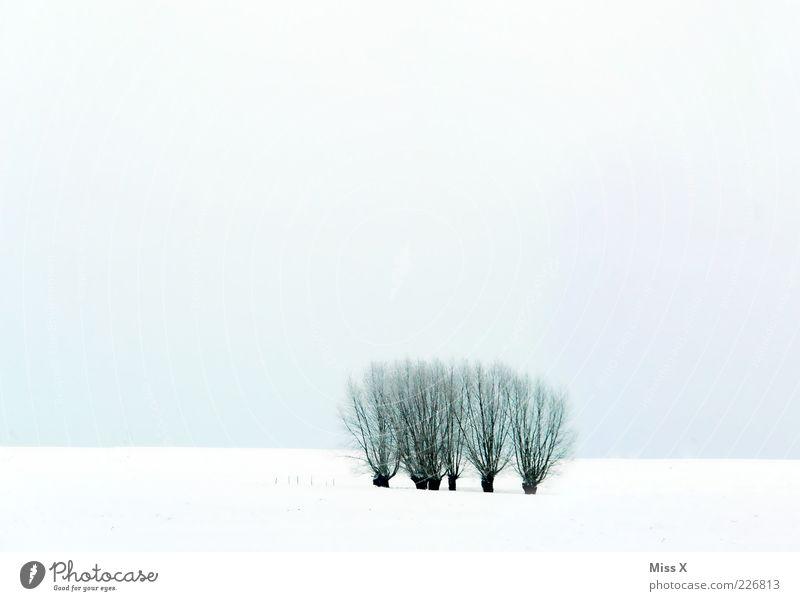 Weiden Natur Landschaft Winter Baum Feld kalt weiß Himmel Farbfoto Gedeckte Farben Außenaufnahme Menschenleer Textfreiraum oben Textfreiraum unten Licht