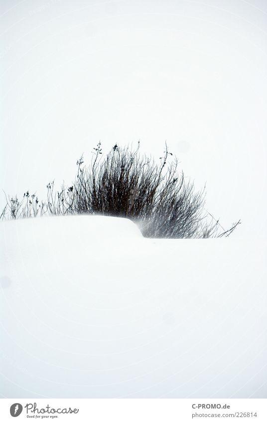 Schneesturm Wind Sträucher kalt weiß Farbfoto Gedeckte Farben Außenaufnahme Detailaufnahme Textfreiraum oben Textfreiraum unten Kontrast Schneewehe Silhouette