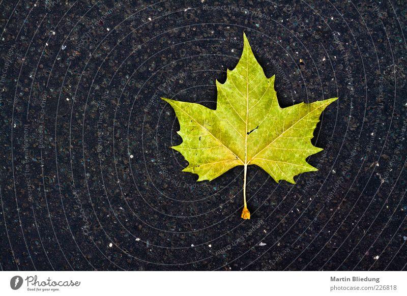 Deckblatt Natur grün Blatt schwarz gelb Herbst grau liegen Design Beton einfach Asphalt eckig Blattadern Herbstbeginn