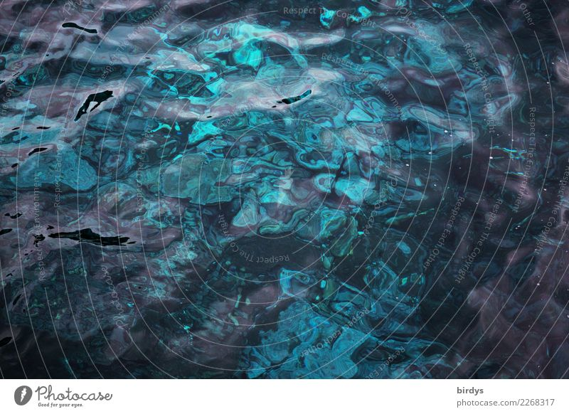 Madeira blue Natur blau Farbe Wasser Meer ruhig ästhetisch geheimnisvoll Klarheit rein türkis exotisch positiv maritim Meeresboden formatfüllend