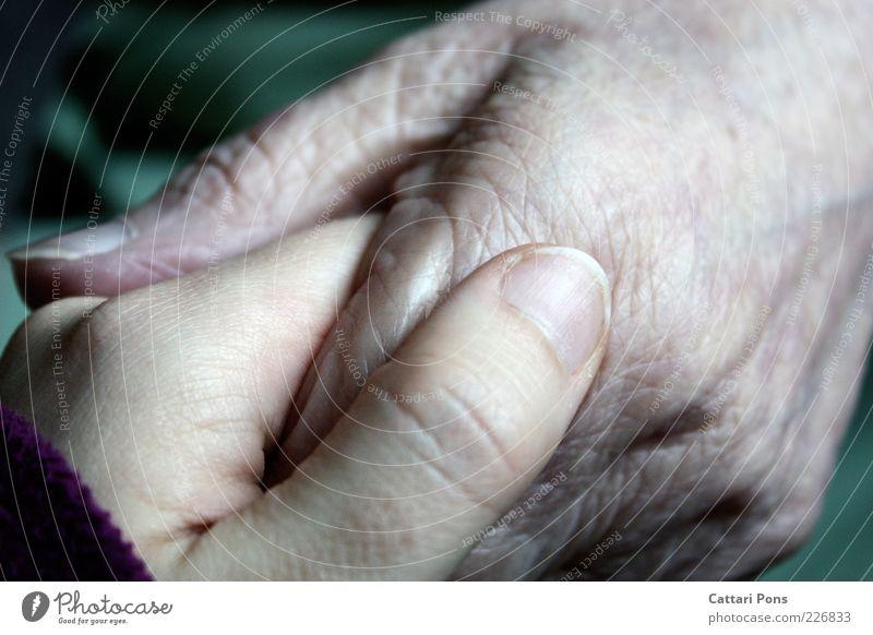 Generation Frau Mensch Jugendliche Hand ruhig Erwachsene Liebe Senior Familie & Verwandtschaft Kindheit Finger Kommunizieren festhalten Hautfalten Schutz