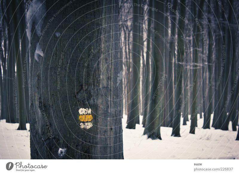 Auf dem richtigen Weg Freizeit & Hobby Winter Schnee Umwelt Natur Baum Wald Zeichen Schilder & Markierungen dunkel kalt grau weiß Wachstum Baumstamm Hinweis