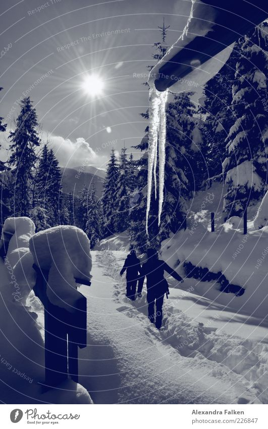 Schnee mit Sonne. Mensch Natur Pflanze Ferien & Urlaub & Reisen Winter Leben kalt Freiheit Berge u. Gebirge Umwelt Landschaft Wetter Freizeit & Hobby Ausflug
