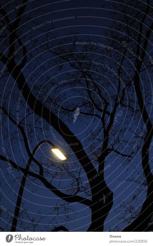 Der letzte macht das Licht aus Baum Laterne Straßenbeleuchtung Silhouette schwarz blau Himmel Dämmerung Kunstlicht Abend Nacht Hochformat Nachtruhe Gute Nacht