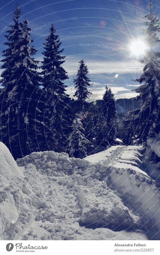 Schnee mit Sonne II. Himmel Natur blau Pflanze Sonne Winter Wald kalt Schnee Berge u. Gebirge Umwelt Landschaft Wege & Pfade Wetter Klima Hügel