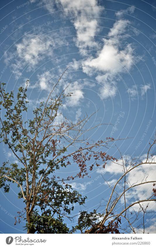 Grün Blau Weiss. Umwelt Natur Pflanze Himmel Wolken Sommer Klima Wetter Schönes Wetter Baum Blatt Sträucher blau Ast Farbfoto Menschenleer Textfreiraum oben Tag