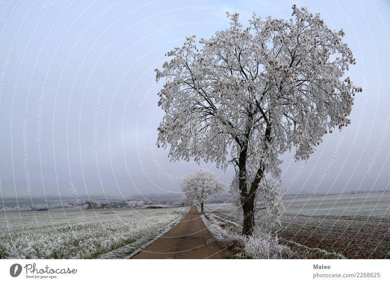 Morgenfrost Winter Baum kalt Schnee Schneefall Wege & Pfade Dezember Januar Februar Frost Morgendämmerung Sonnenaufgang Boden Eis Straße weiß Raureif Himmel