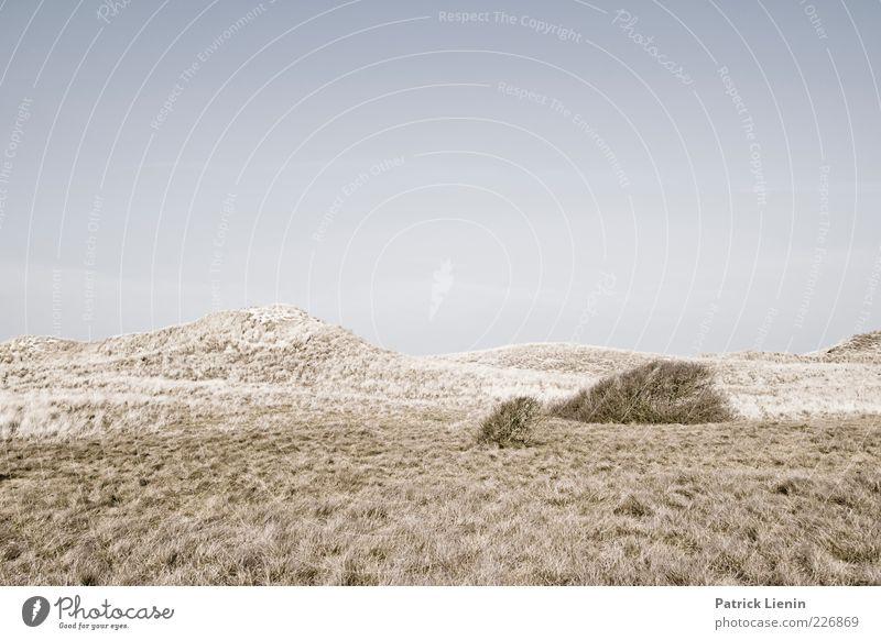 so lonely Umwelt Natur Landschaft Urelemente Luft Himmel Wolkenloser Himmel Klima Wetter Wind Pflanze Wildpflanze Stimmung Amrum Düne karg Einsamkeit Hügel