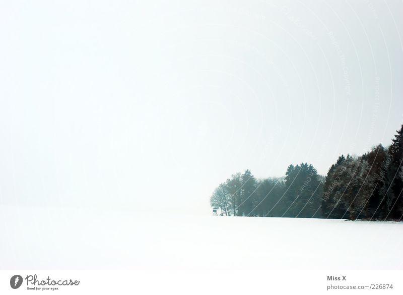 Weiß und Wald Himmel weiß Baum Wolken Winter Schnee Landschaft hell Nebel schlechtes Wetter Waldrand