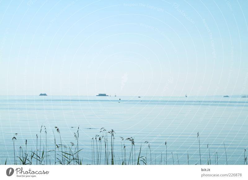 und den Blick genießen ;-) harmonisch Erholung ruhig Sommer Strand Wellen Umwelt Natur Frühling Pflanze Seeufer Schifffahrt Fähre blau Glück Zufriedenheit