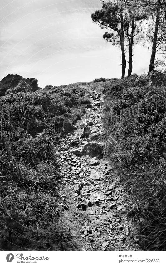 800 Stolpersteine Natur Baum Berge u. Gebirge Landschaft Gras Wege & Pfade Felsen Sträucher authentisch Ziel Hügel Gipfel Fußweg steil steinig Geröll