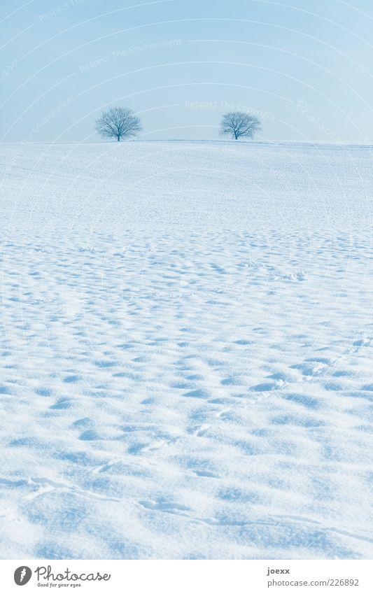 Königskinder Natur Landschaft Himmel Horizont Winter Schönes Wetter Eis Frost Schnee Baum Hügel blau weiß ruhig Schneelandschaft Farbfoto Gedeckte Farben