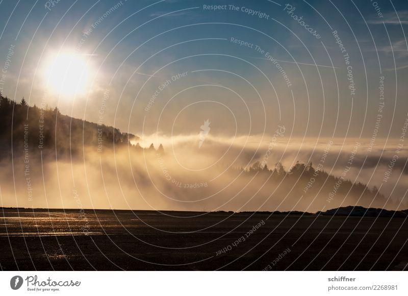 Watte-n-Meer Umwelt Natur Landschaft Pflanze Himmel Wolken Sonne Sonnenaufgang Sonnenuntergang Sonnenlicht Winter Hügel Berge u. Gebirge gelb orange schwarz