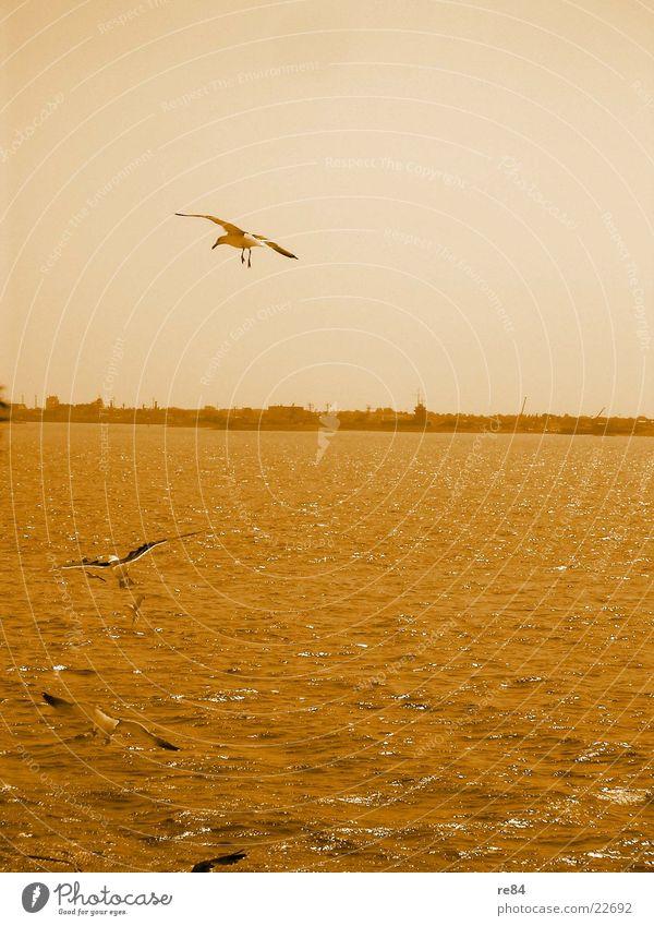 orange view - northern sea Himmel Ferien & Urlaub & Reisen Wasser Meer Strand Wasserfahrzeug orange Möwe Nordsee Niederlande Fähre Texel