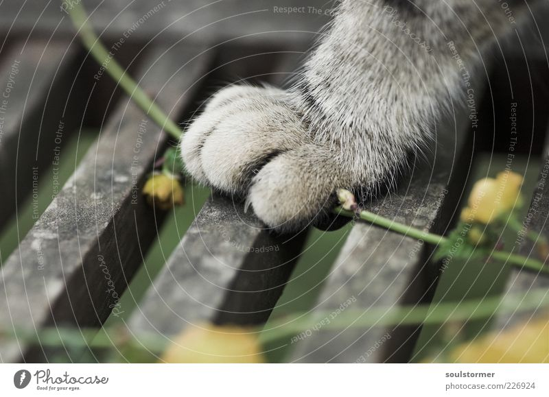 Katzenfuß Tier Haustier 1 Tierjunges stehen Frühling Pfote Krallen Blume Holz Bank Jagd Fell Pause schön Farbfoto Gedeckte Farben Außenaufnahme Menschenleer