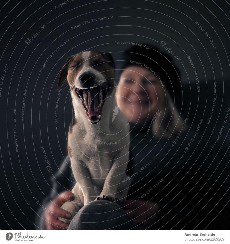Bitte Lächeln Mensch feminin Frau Erwachsene 1 Tier Haustier Hund lustig Müdigkeit Jack-Russell-Terrier gähnen selektiver fokus Jagdhund Rassehund Maul