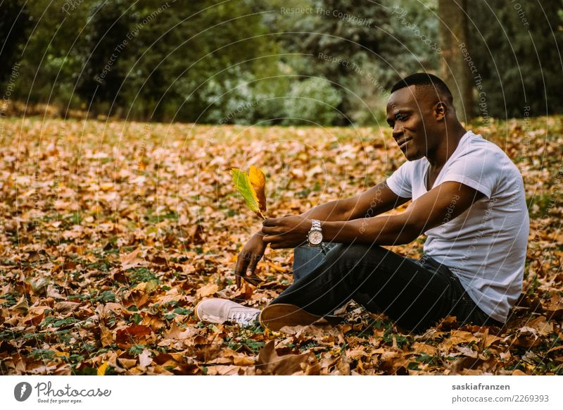 Park III. Zufriedenheit Ferien & Urlaub & Reisen Mensch maskulin Junger Mann Jugendliche Erwachsene Kultur Natur Herbst Blatt Jeanshose liegen träumen sportlich
