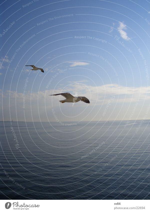 Anflug auf Texel Möwe Meer Niederlande Wolken Tier weiß Luftverkehr Wasser Nordsee Blick Flügel Klarheit fliegen blau Kontrast
