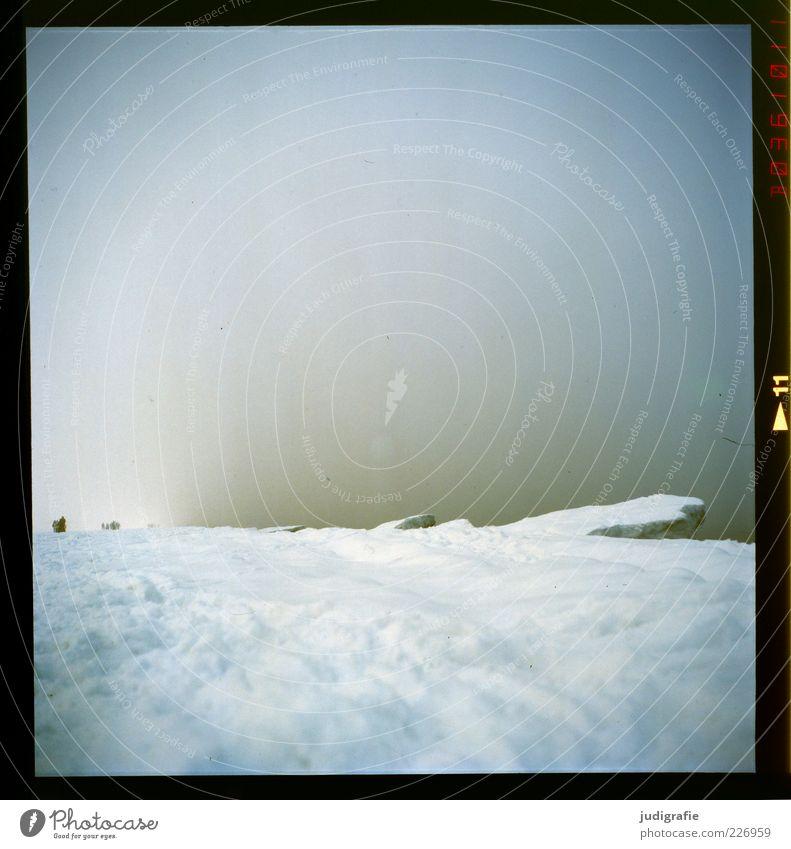 Küstennebel Umwelt Natur Landschaft Winter Klima Nebel Eis Frost Schnee Strand Ostsee Meer Prerow Darß außergewöhnlich bedrohlich dunkel gruselig kalt natürlich