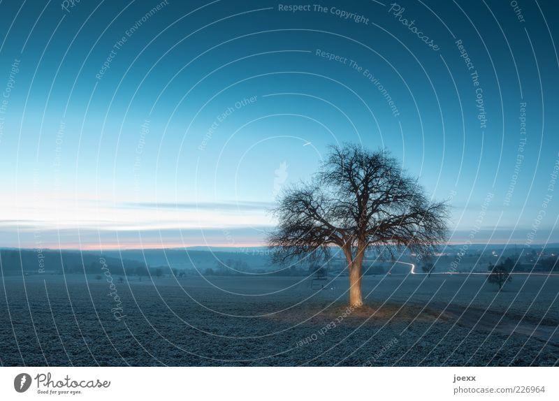 Morgendämmerung Himmel Natur blau Baum Wolken ruhig Winter Herbst Umwelt Wege & Pfade braun Feld Schönes Wetter