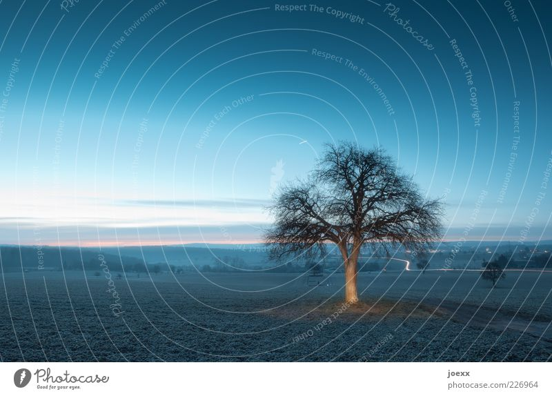 Morgendämmerung Himmel Natur blau Baum Wolken ruhig Winter Herbst Umwelt Wege & Pfade braun Feld Schönes Wetter Morgen