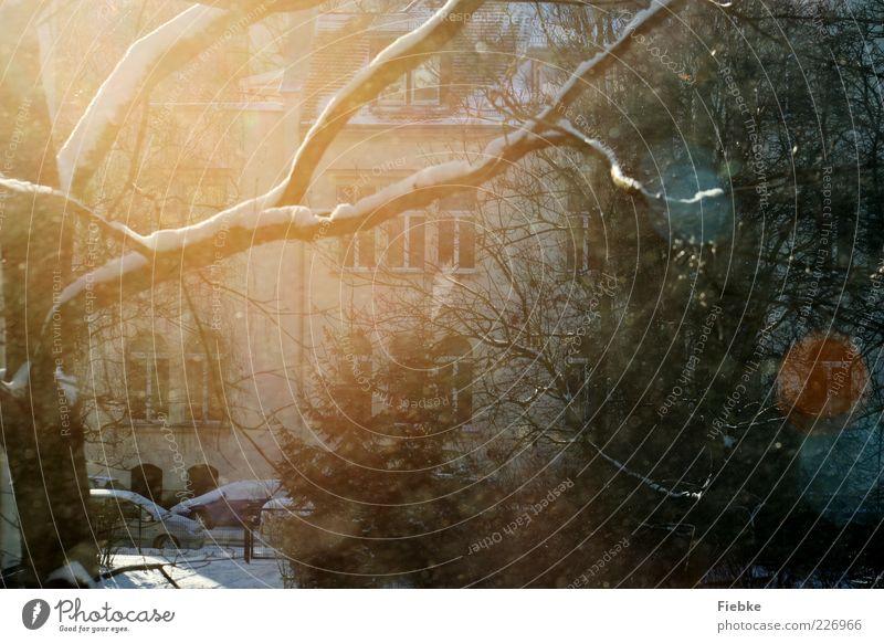 Schöner Schein Umwelt Natur Winter Schönes Wetter Schnee Pflanze Baum Sträucher Blatt Haus Fassade Fenster mehrfarbig hell Beleuchtung leuchten Sonne Wintertag