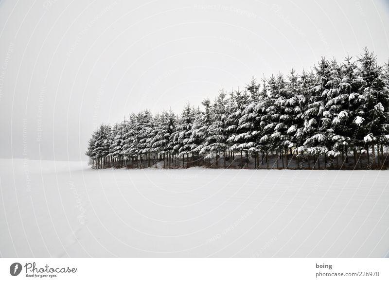 Weihnachtsbaumschule Oberstufe Baum Winter Schnee Landschaft Wachstum Tanne Fichte Plantage Baumschule Kulturlandschaft